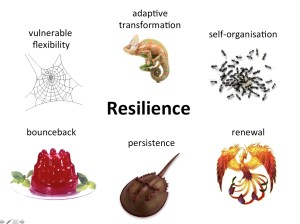What is resilience? 6 icons tell the story.